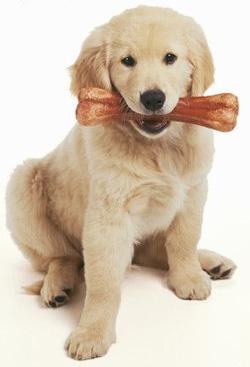 bp-dog-bone